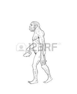 248x300 Coloring Pages Charming Homo Erectus Drawing 50519018 Human