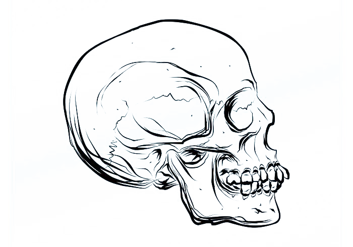 700x490 Drawing Skull Cartoon Euclidean Vector