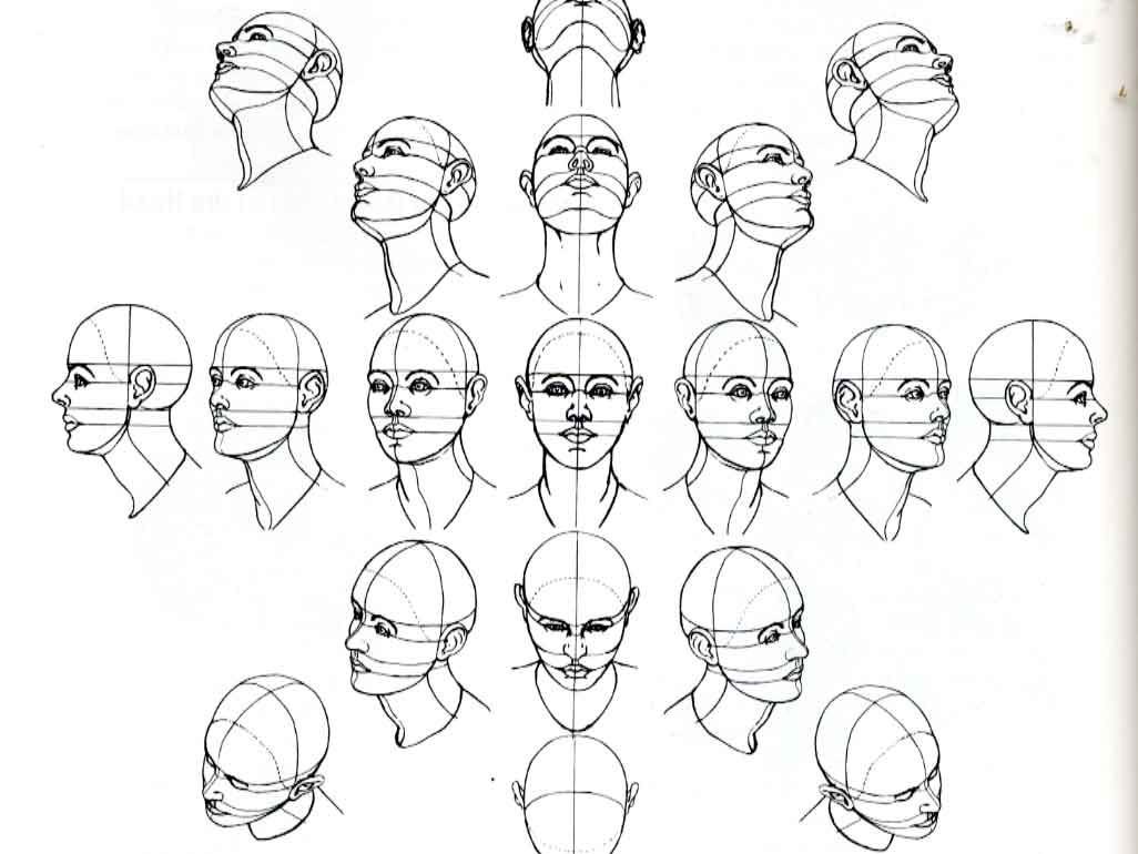 1026x770 Human Face's Proportions Anatomy Tutorial, Face Proportions
