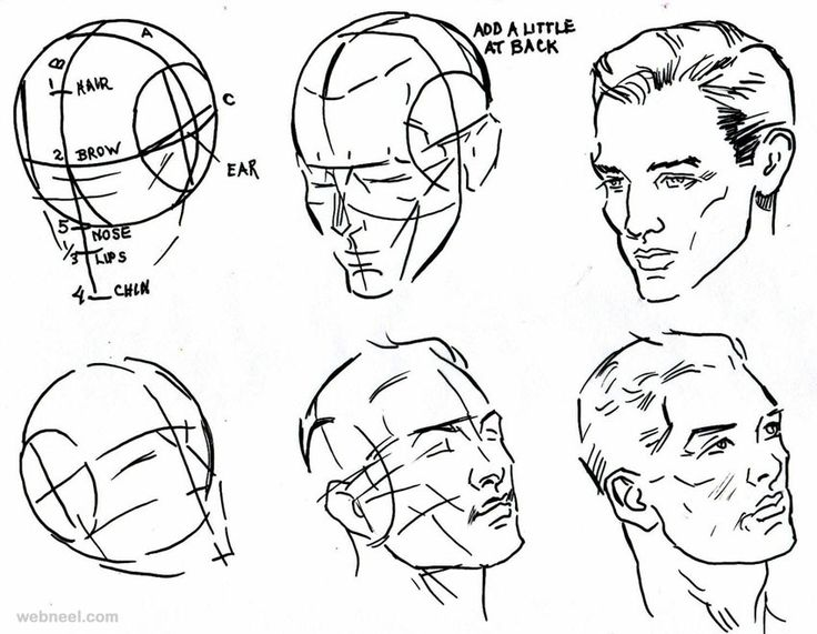 736x571 The 9 Best Images About Drawing A Human Face