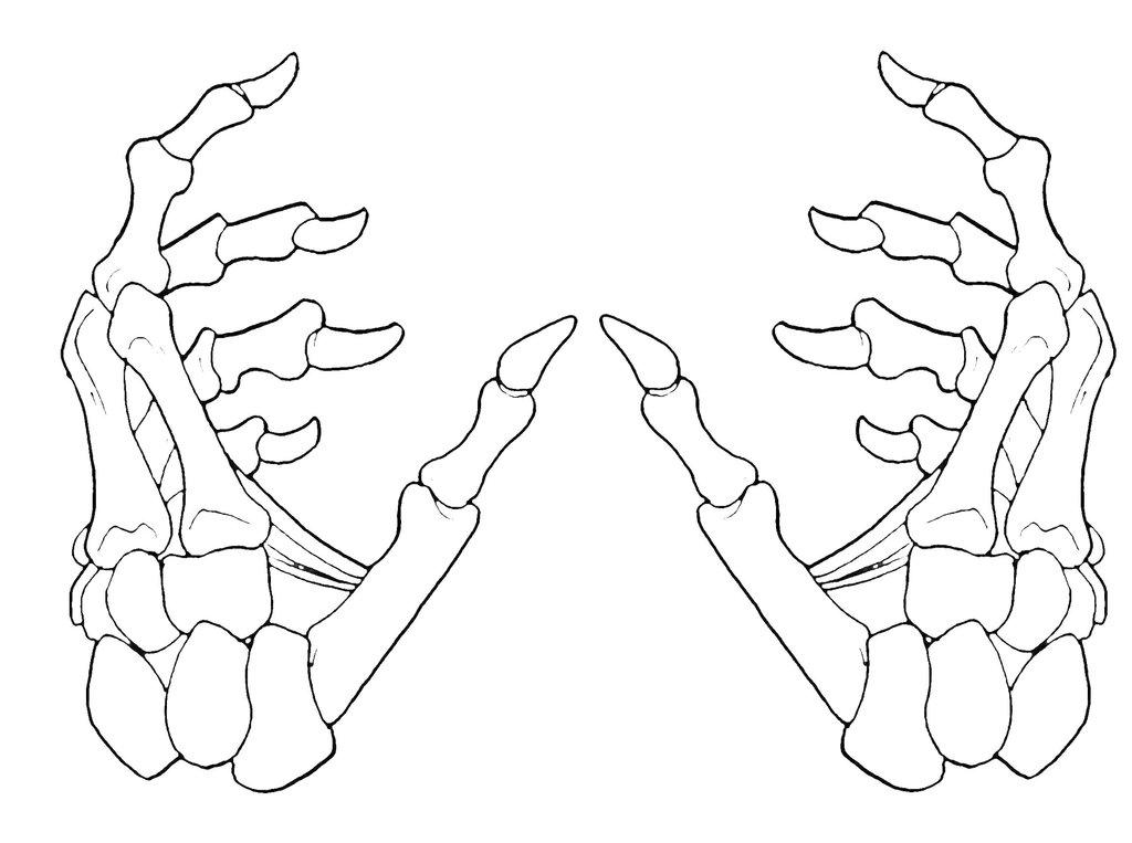 1024x763 Skeleton Hands 2 1 By Krazykavumaster