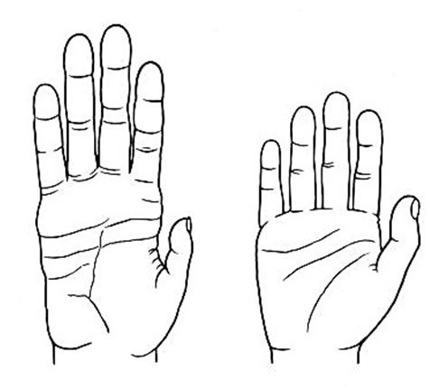 486x431 Are Human Hands More Primitive Than Chimps' Answers In Genesis