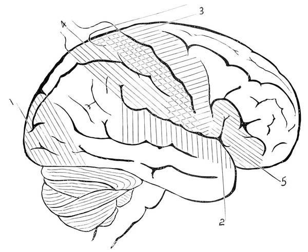 600x492 Human Anatomy Human Brain Coloring Pages Bulk Color