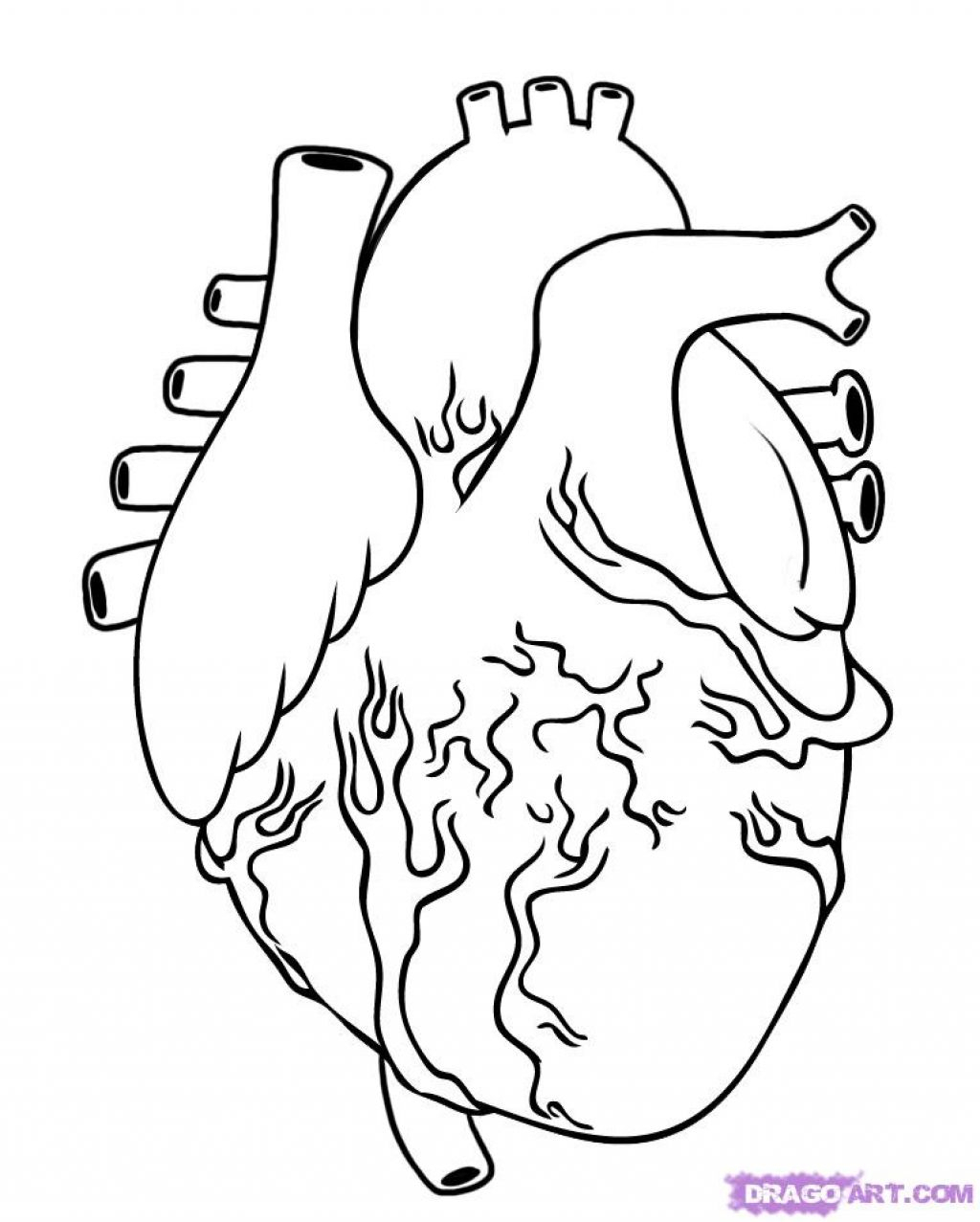 1024x1277 Simple Human Heart Drawing Simple Human Heart Drawing
