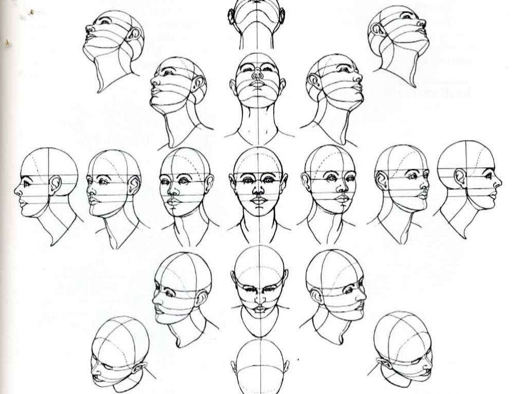 1024x768 Facial Drawing Reference 1000 Images About Drawing The Human Head
