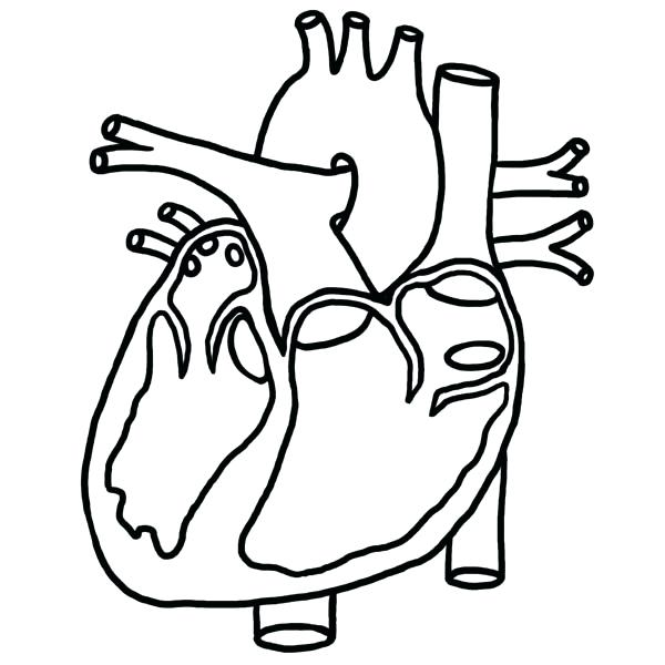 600x600 Coloring Page Heart Club On Com Anatomy Coloring Book Kaplan