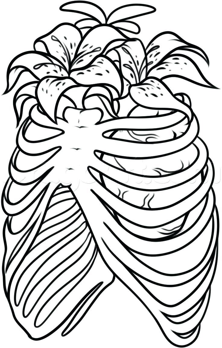 736x1154 Human Heart Anatomy For Kids Coloring Page Body The Home Colouring