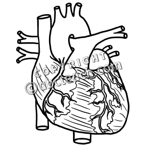 300x300 Human Heart Black And White Clipart