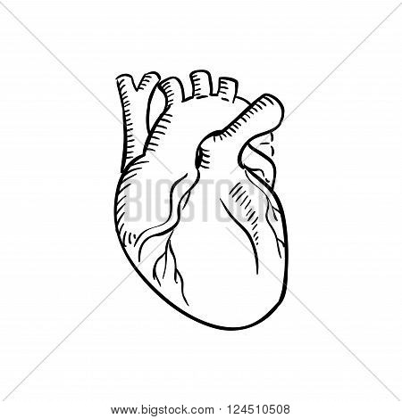 450x470 Human Heart Outline Sketch. Vector Amp Photo Bigstock