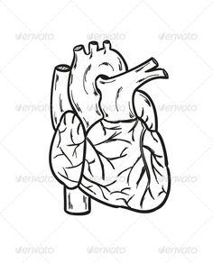 236x292 Anatomical Heart Anatomical Heart