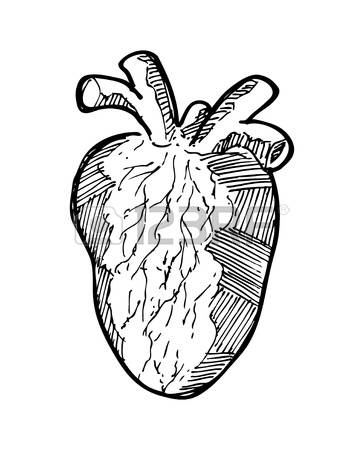 364x450 Pen Line Human Anatomy Clipart