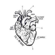 236x236 Human Heart Valentine (2012)