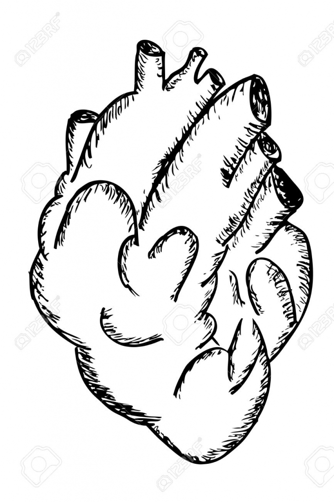 682x1024 How To Draw A Human Heart Hand Draw Sketch Human Heart Stock Photo
