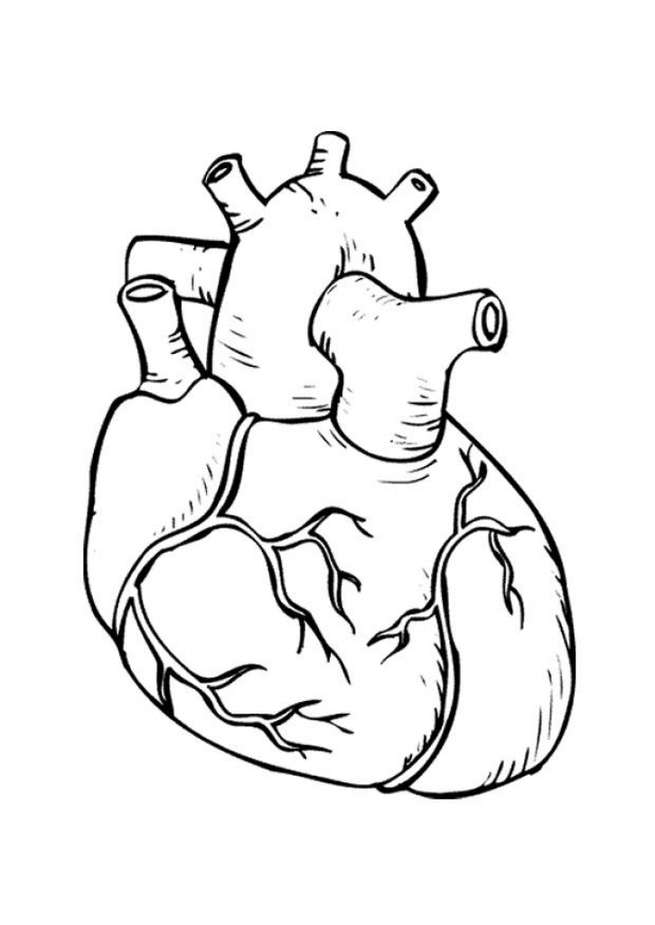 725x1024 Human Heart Coloring Page