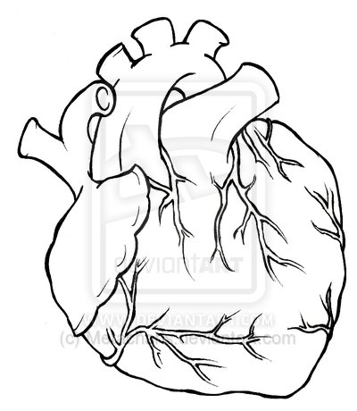 400x460 Human Heart Tattoo Drawing