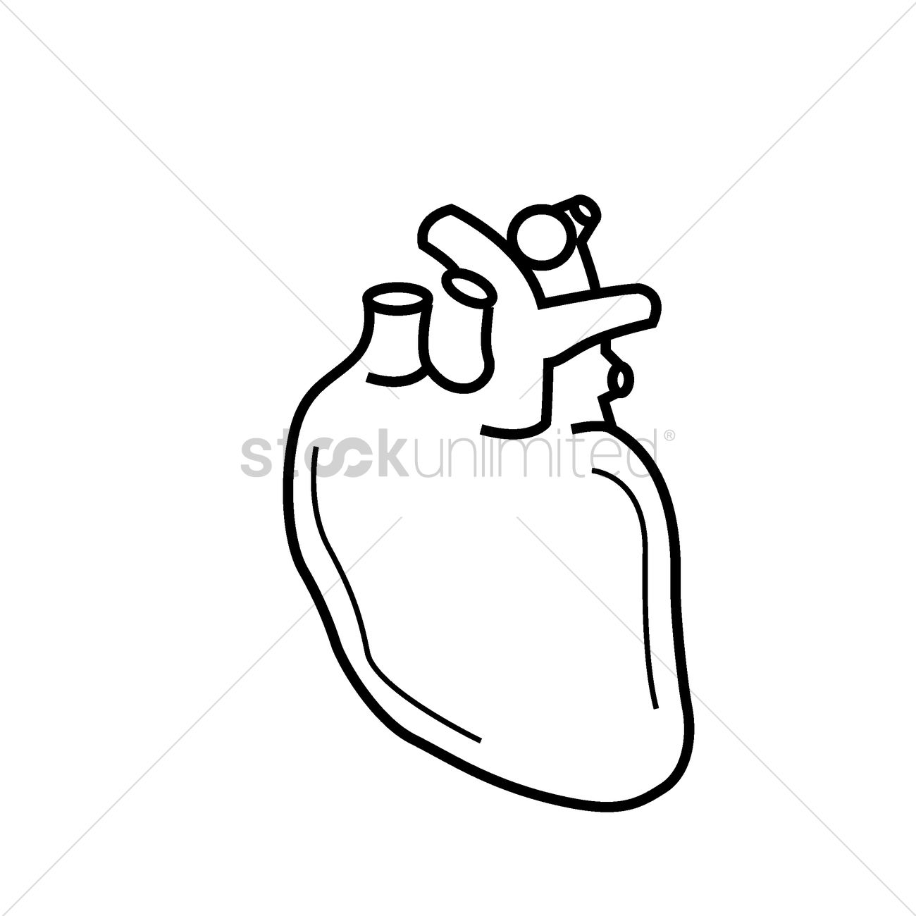 1300x1300 Human Heart Vector Image