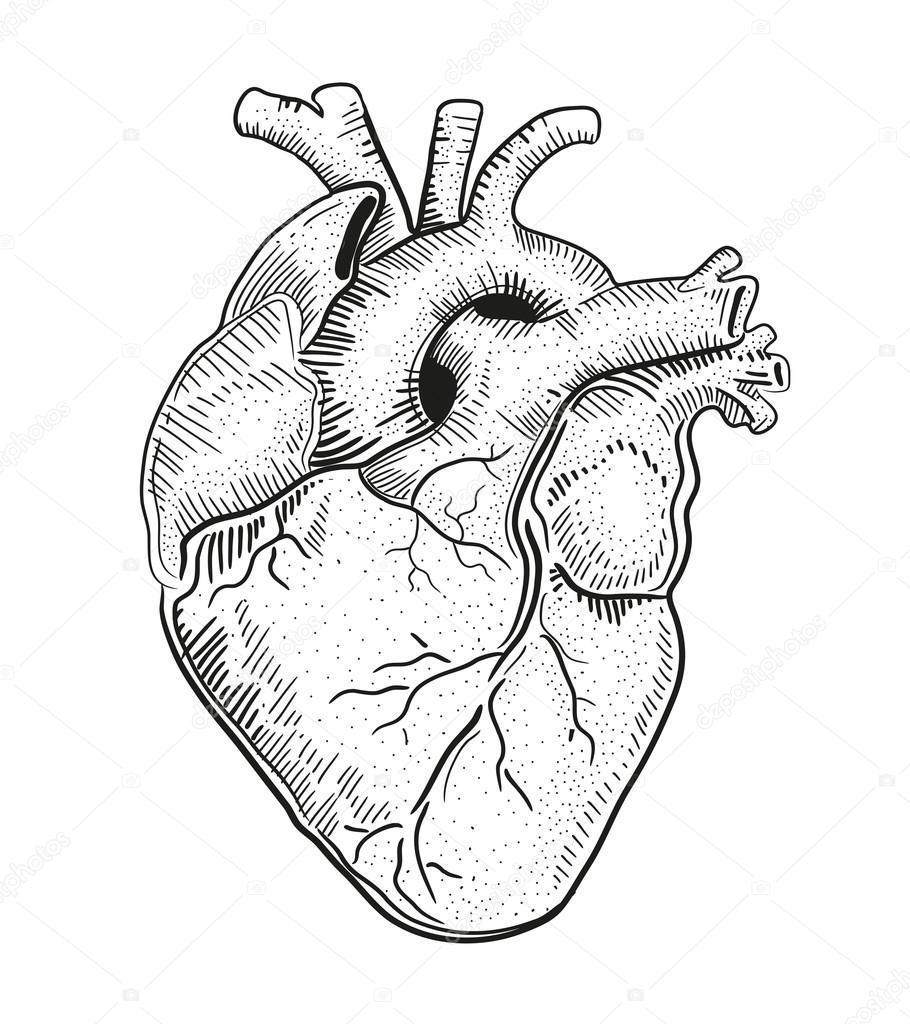 910x1024 Human Heart. Illustration. Stock Vector Bernardojbp