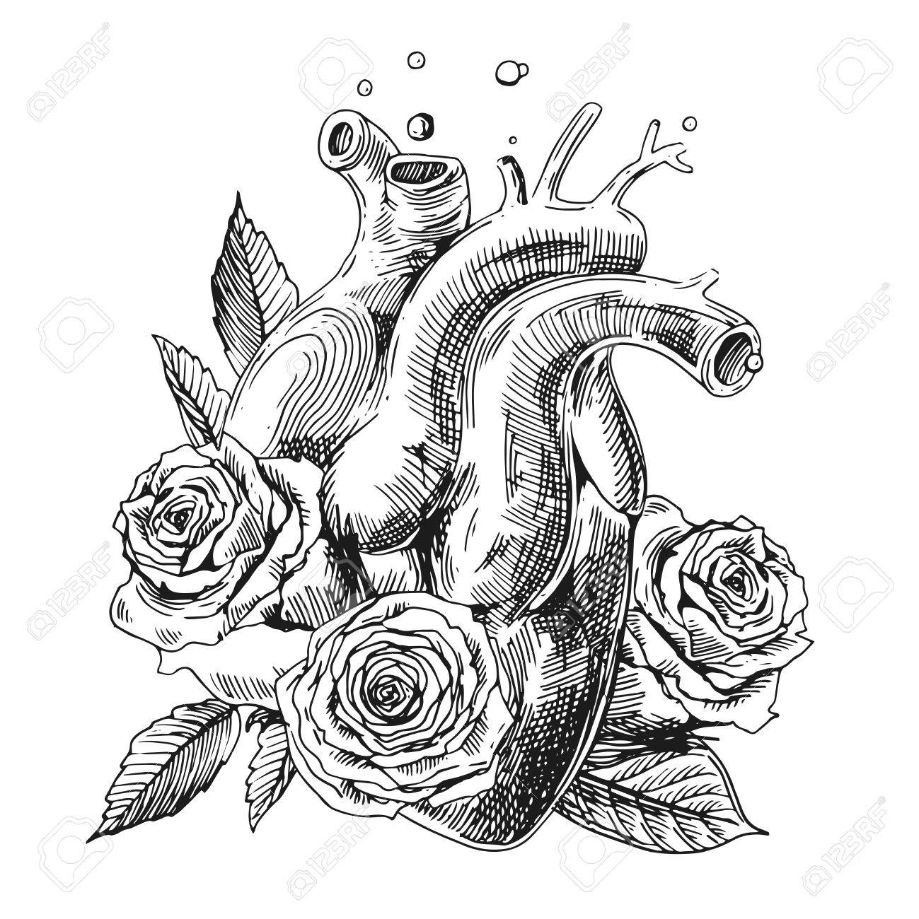 1299x1300 Illustration With Sketch Of Human Heart. Hand Drawn Vector