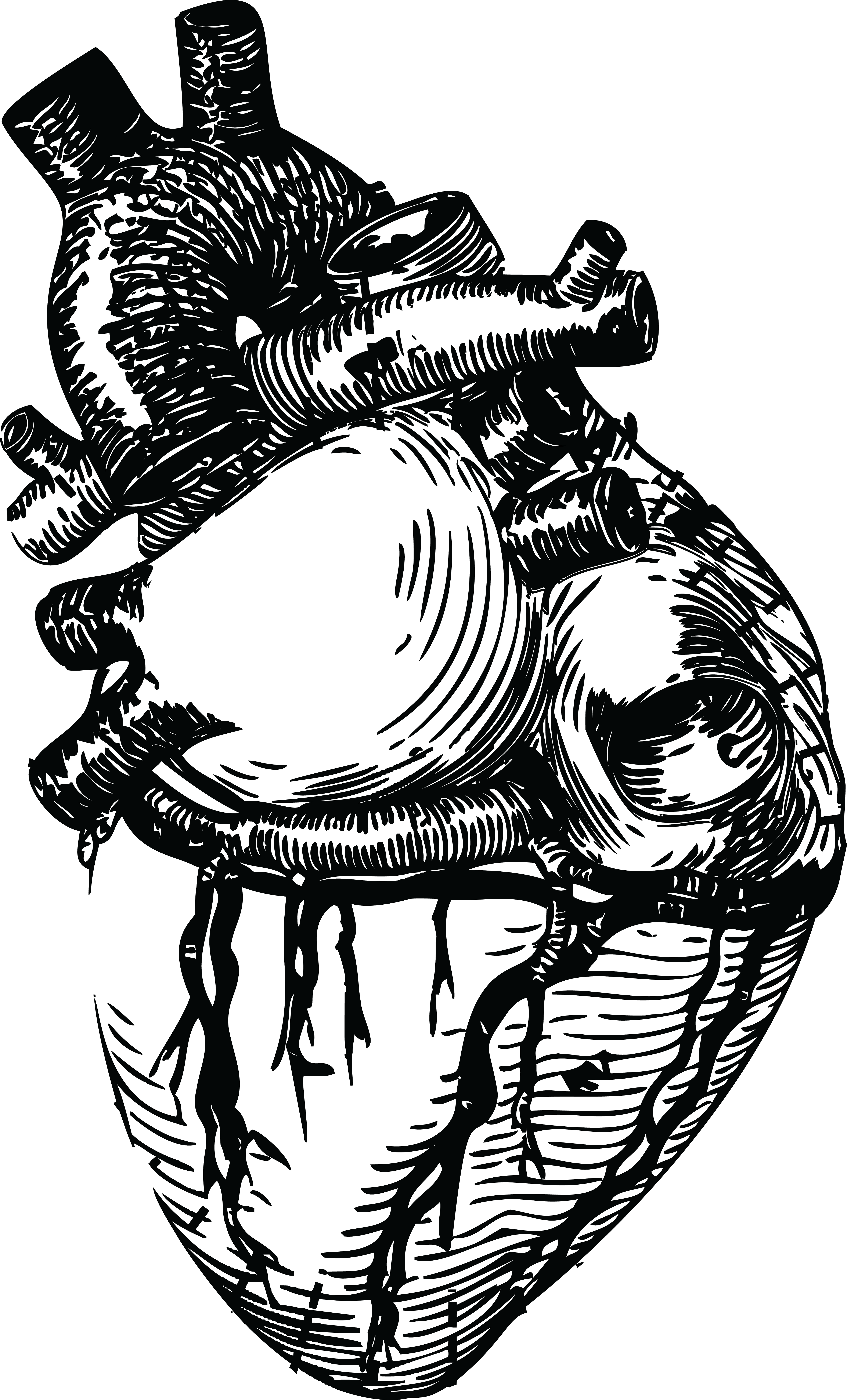 4000x6616 Free Clipart Of A Human Heart In Black And White