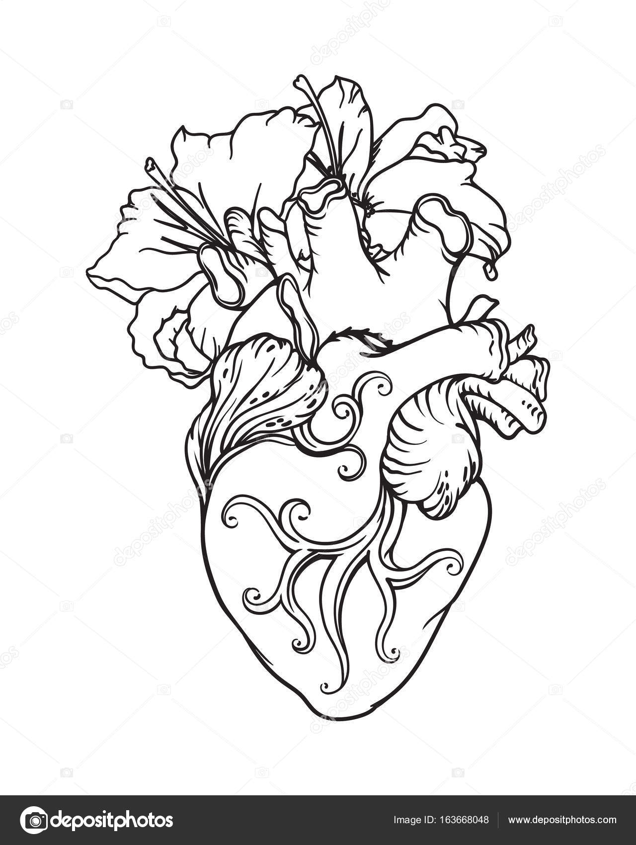 1280x1700 Stylized Anatomical Human Heart Drawing. Heart With White Lilies