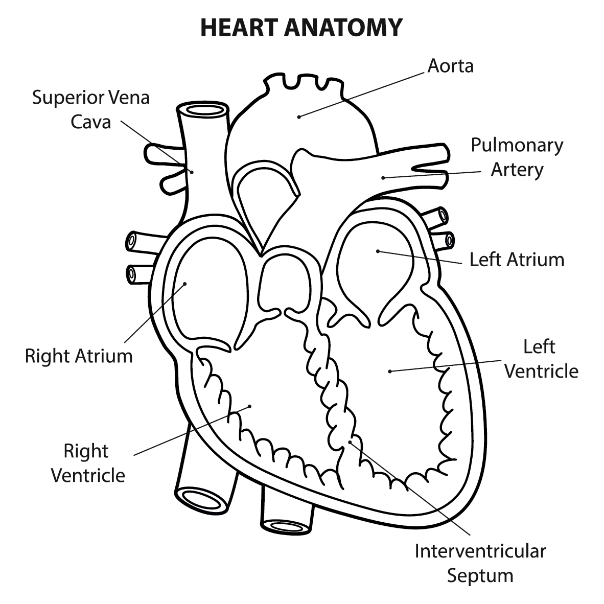 Human heart drawing images at getdrawings free for personal 1182x1182 what are the parts that make up a human heart diagrams and more ccuart Choice Image