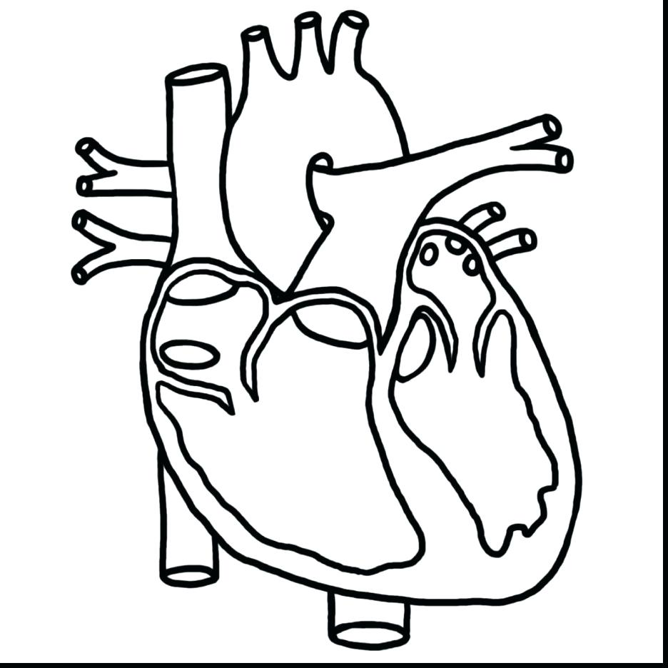 936x936 Coloring Human Heart Coloring Pages Hand Drawn Patterned