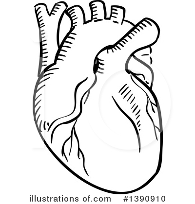400x420 Human Heart Clipart Black And White