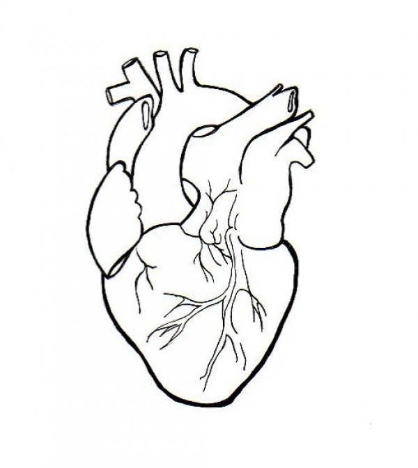 600x672 Human Heart Clipart Drawing