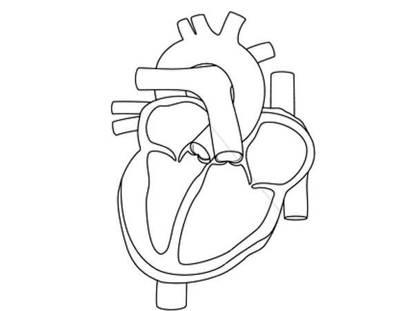 human heart drawing outline at getdrawings com