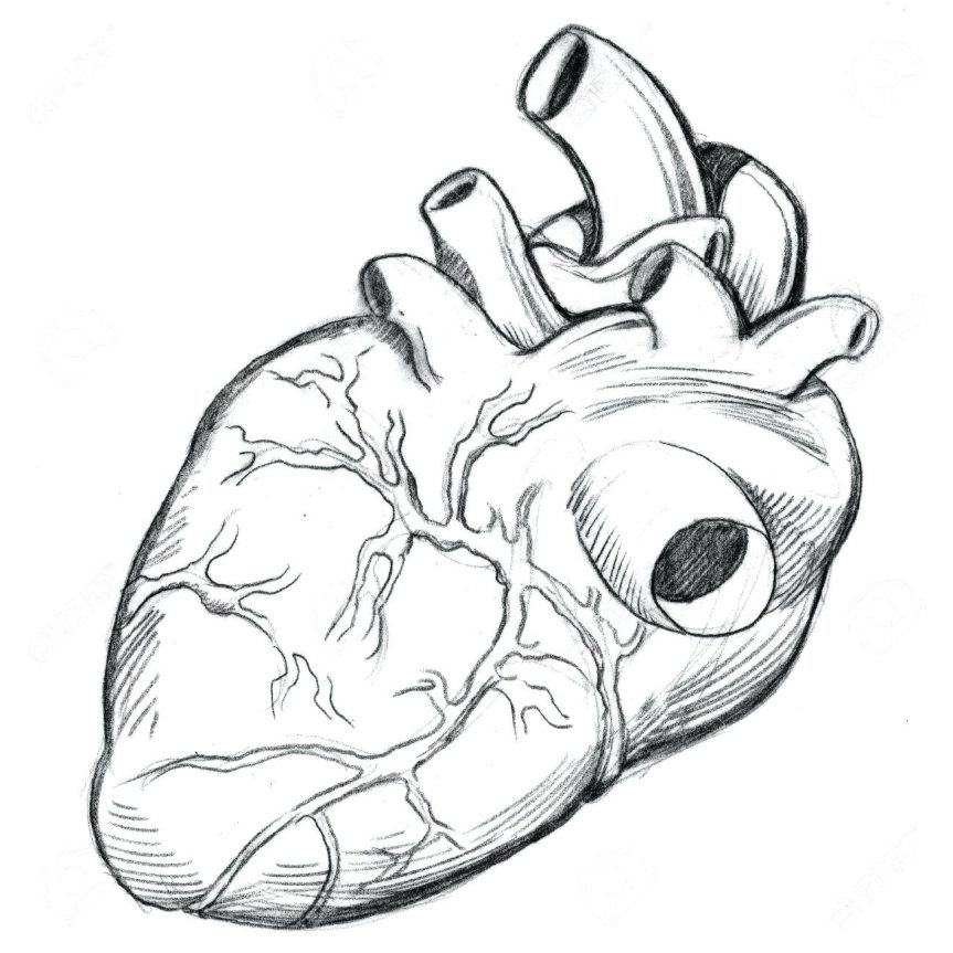 863x863 Coloring Pages Extraordinary Anatomical Heart Outline. Anatomical