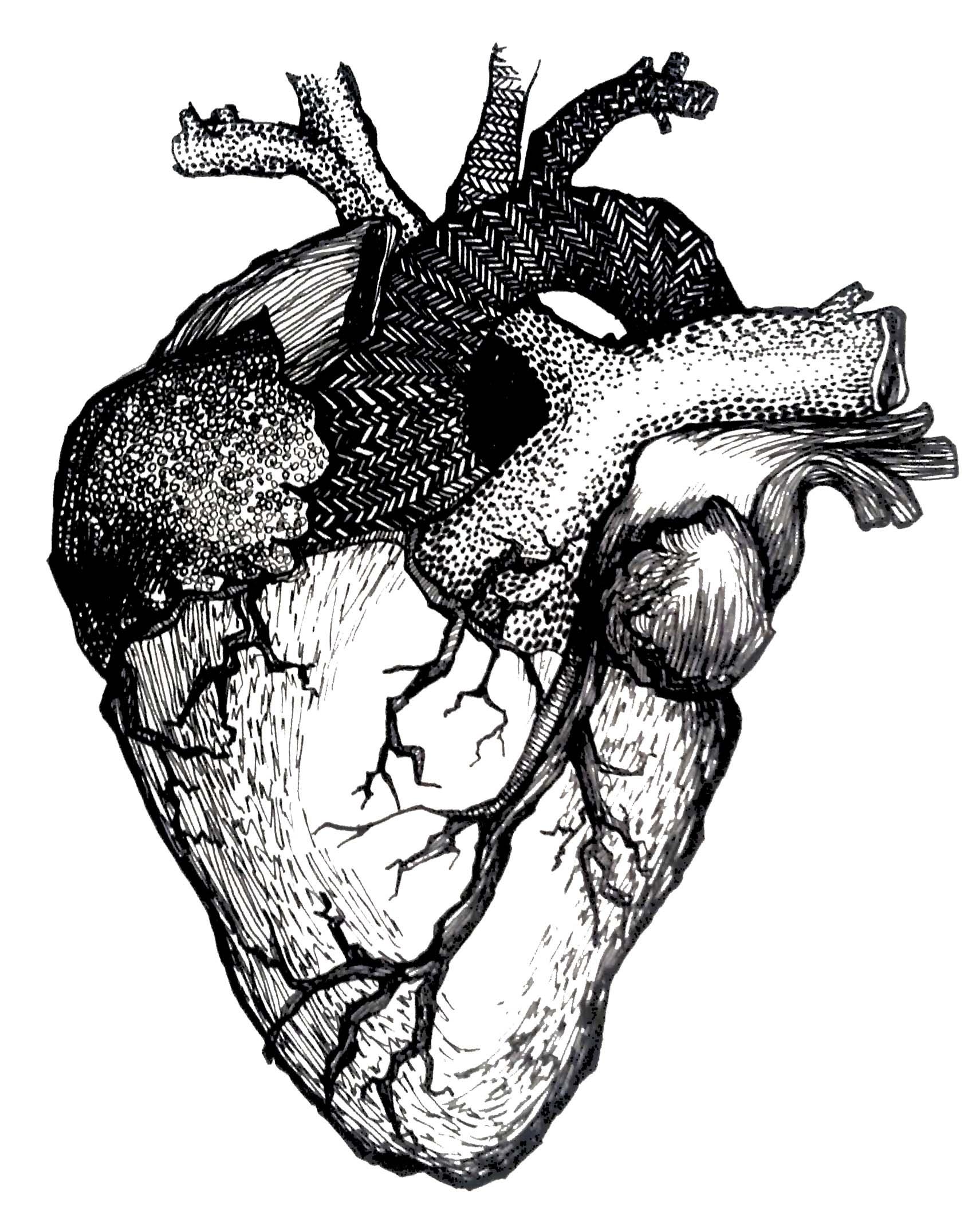 Human Heart Line Drawing