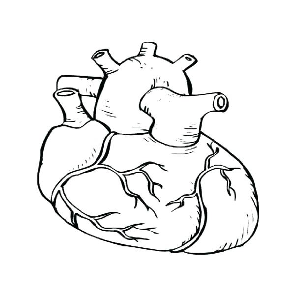 600x600 Heart Anatomy Coloring Pages Heart Anatomy Coloring Pages Healthy