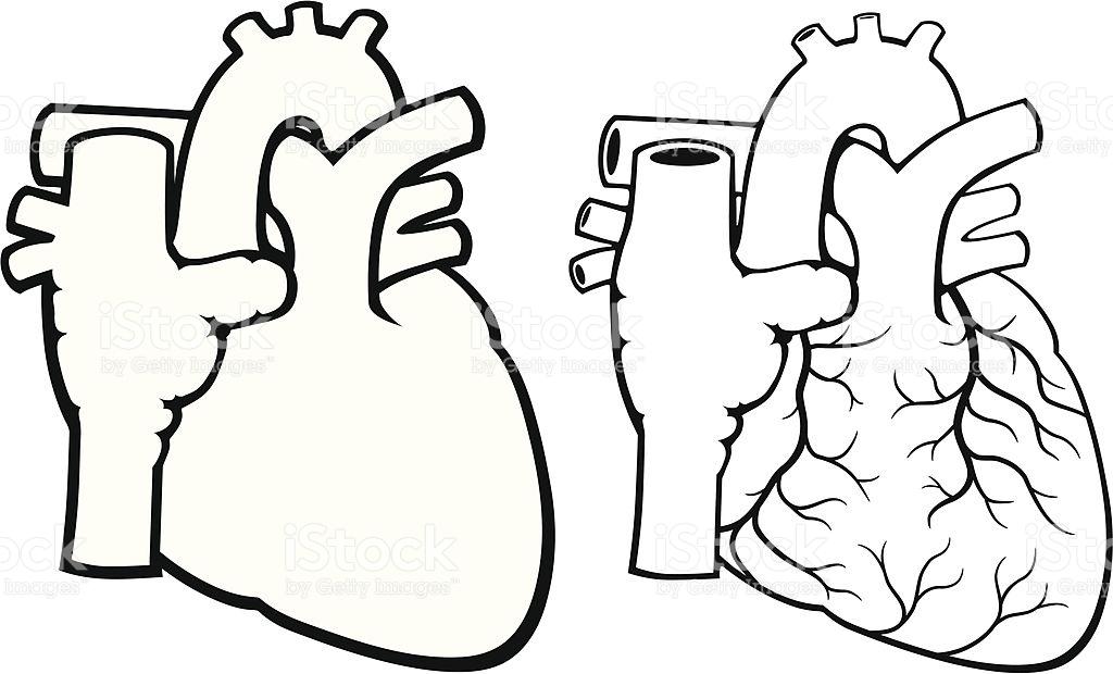 1024x620 Heart Clipart Body
