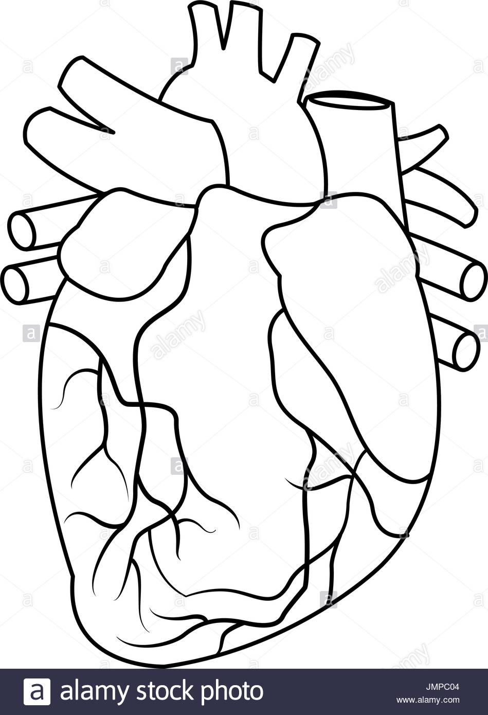 949x1390 Human Heart Black And White Stock Photos Amp Images