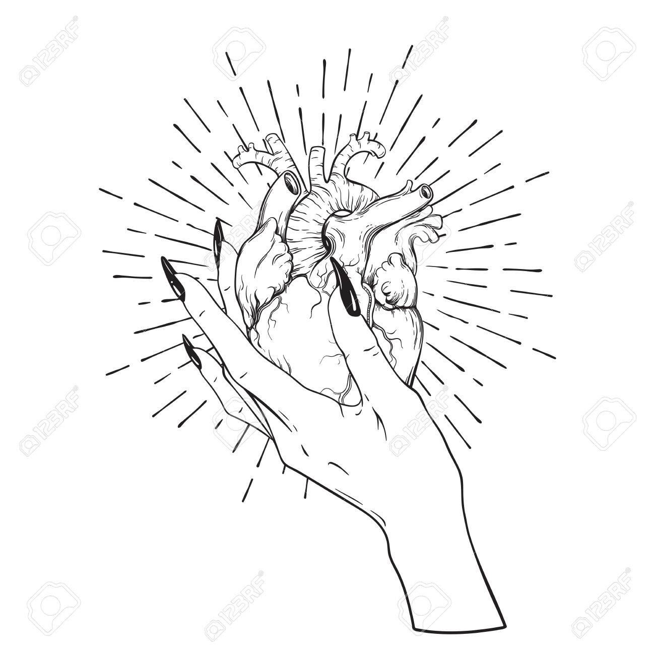 1300x1300 Human Heart In Graceful Female Hand Isolated. Sticker, Print