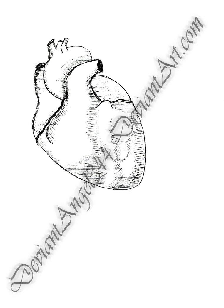 762x1048 Human Heart Lineart By Deviantangel344
