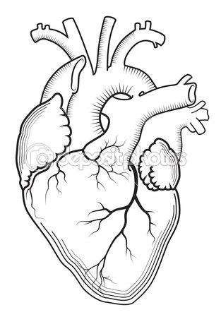 313x449 Heart (Outline Version). Background Vector Isolated Illustration