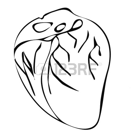 450x450 Human Heart Amatomy.heart Hand Drawing Vintage Style Royalty Free