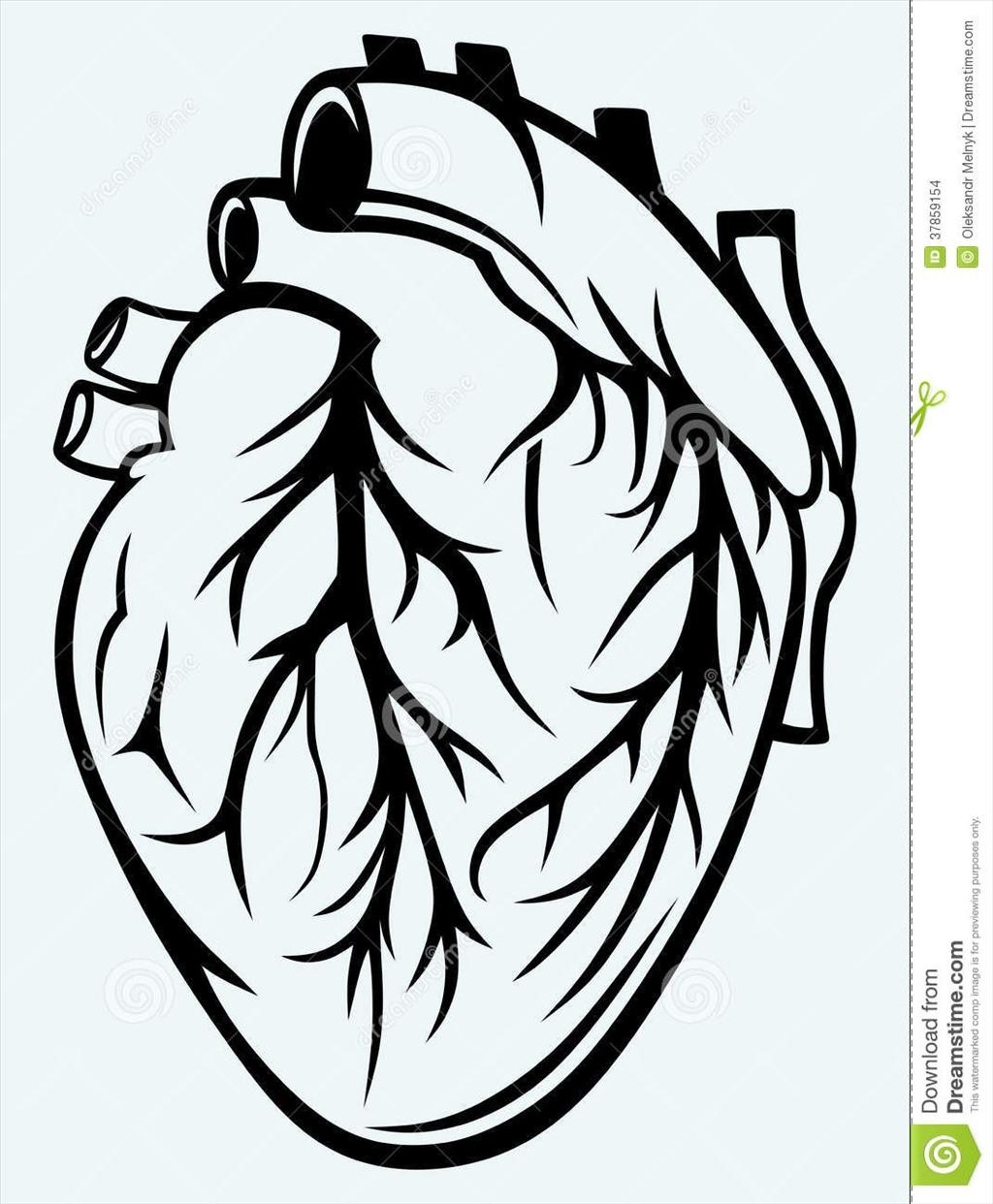 1024x1242 Human Heart Coloring Page
