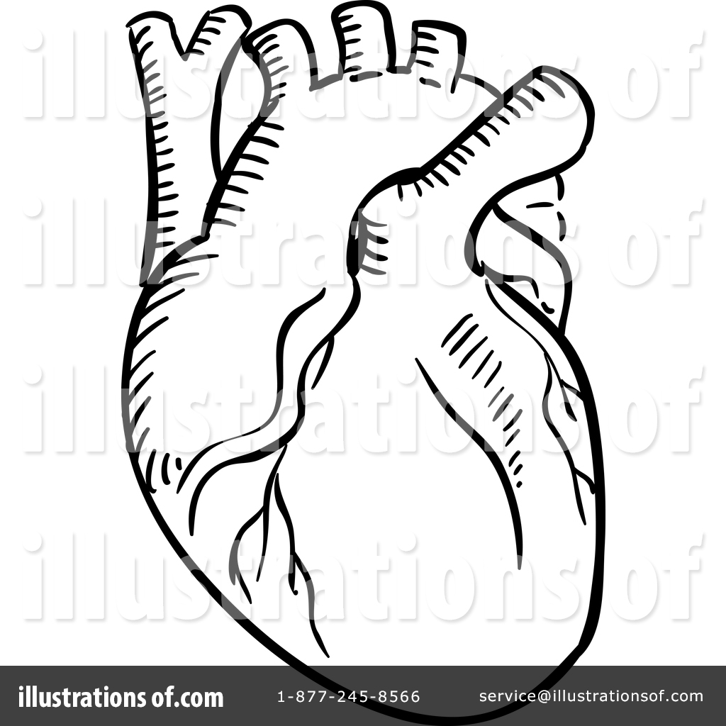 1024x1024 Human Heart Clipart Black And White Collection