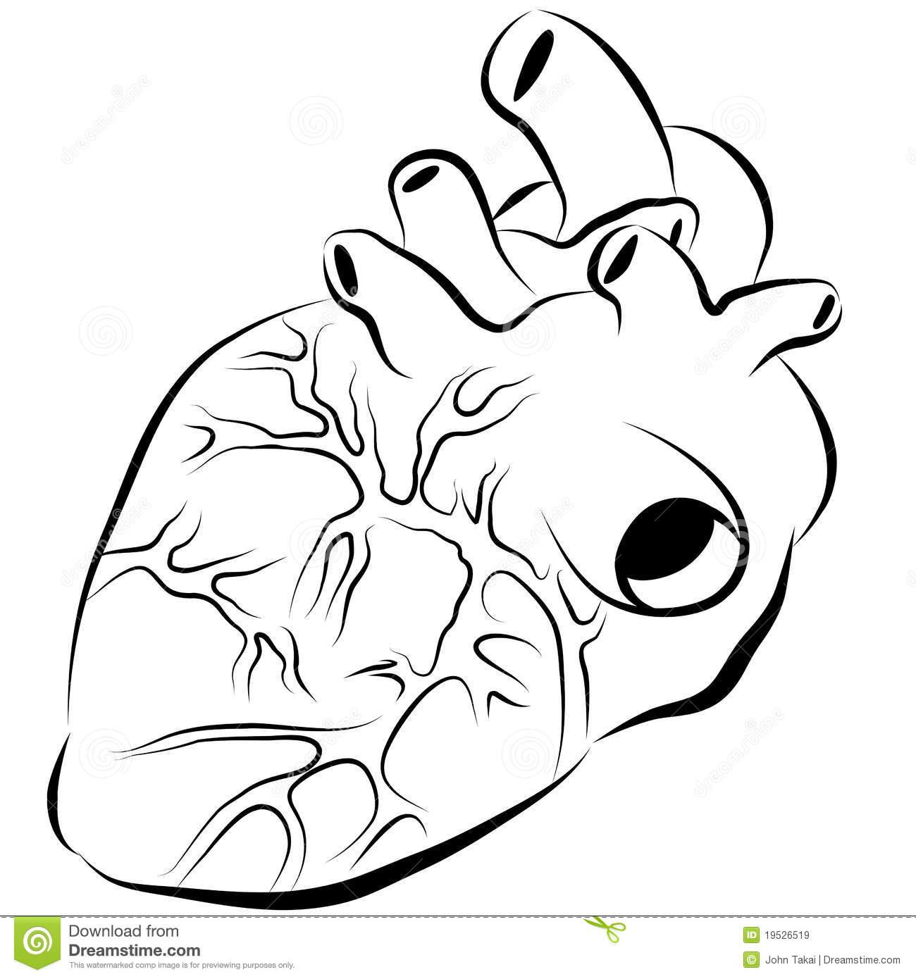 1300x1390 Simple Human Heart Drawing