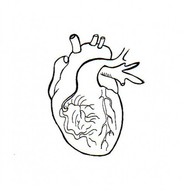 600x628 Heart Embroidery Patterns Human Heart, Stitch And Embroidery