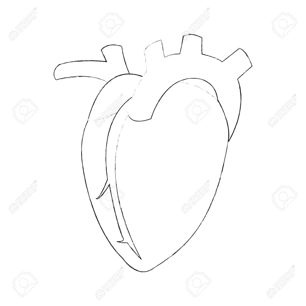 1300x1300 Human Heart Icon Image Vector Illustration Design Simple Sketch
