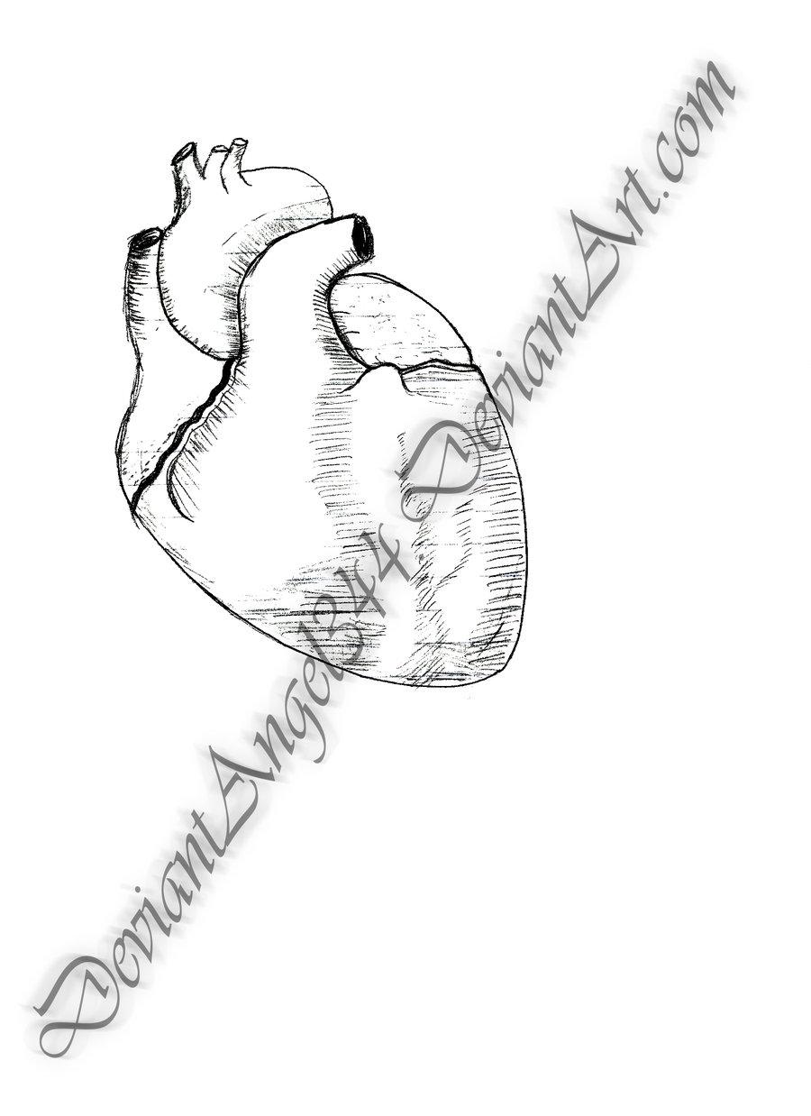 900x1238 Human Heart Lineart By Deviantangel344