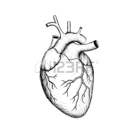450x450 Human Heart Stock Photos. Royalty Free Business Images