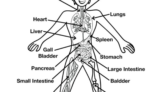 570x320 Simple Drawing Of Circulatory System Imcpl Kids' Info Guide