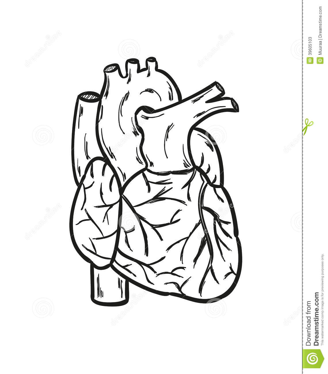 1140x1300 Simple Human Heart Drawing Similiar Simple Human Heart Outline