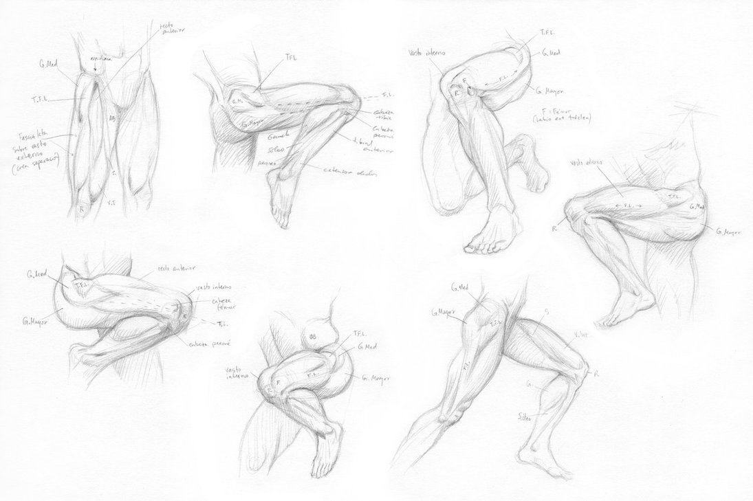 Human Leg Drawing at GetDrawings.com | Free for personal use Human ...