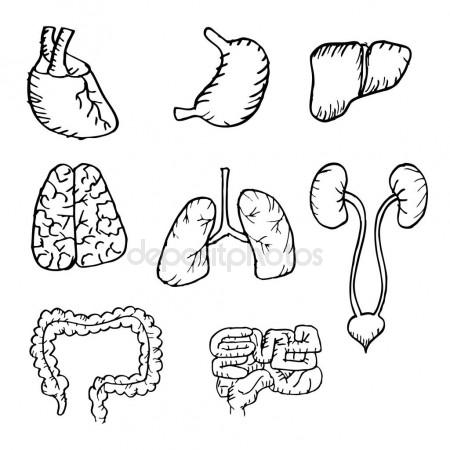 450x450 Internal Human Organs Hand Drawn Icons Set