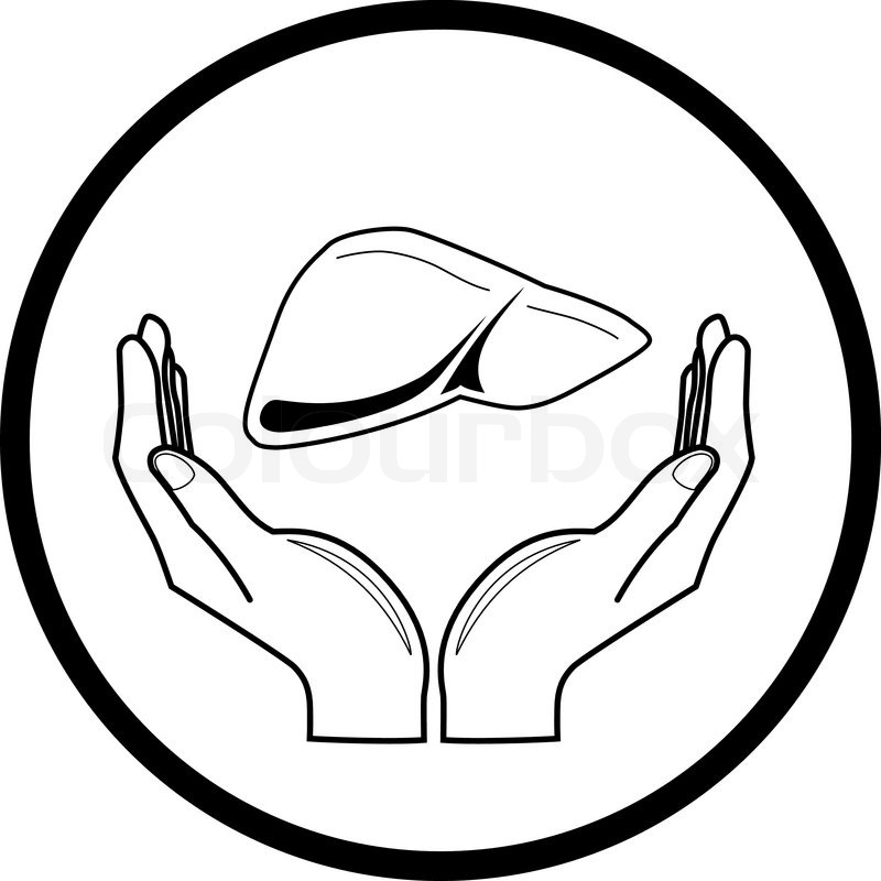 800x800 Vector Simple Outline Liver Icon. Human Abdomen Internal Organs